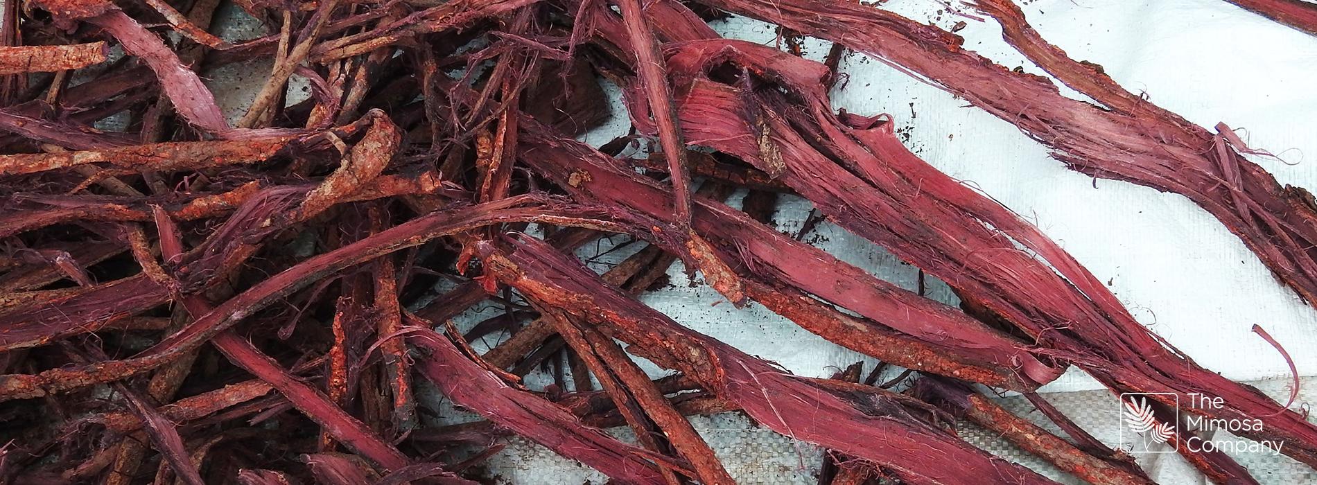 Mimosa hostilis: a vegetable-based alternative for tanning leather