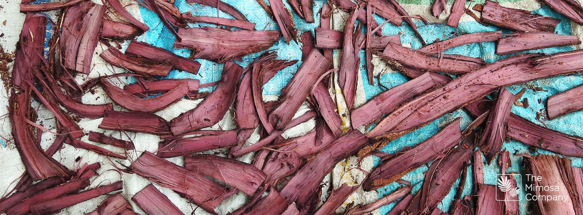 Mimosa hostilis: eine natürliche Wahl für das Färben von Stoffen