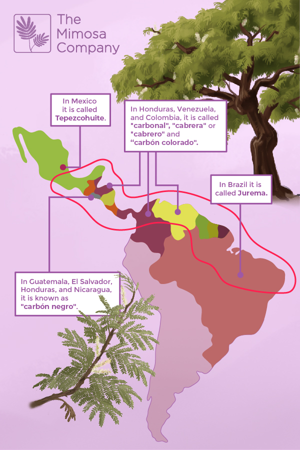 Map of regions where Mimosa hostilis grow
