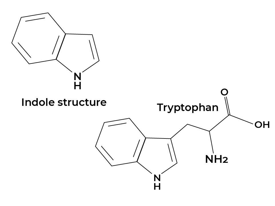 Alcaloides indolicos