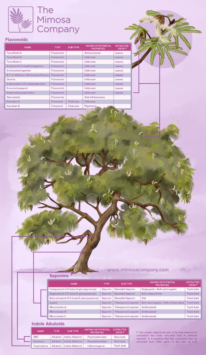 Infographic of Mimosa tenuiflora (syn. Mimosa hostilis))
